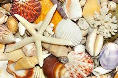 Shellfish background Stock Image