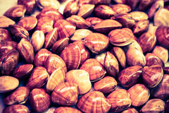 Shellfish background Stock Images