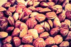 Shellfish background Stock Images