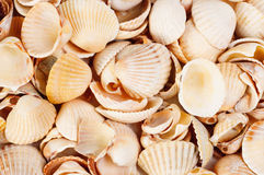 Shellfish  background  studio shot Stock Photography