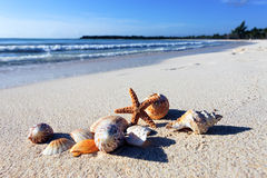 Shellfish beach Royalty Free Stock Photo