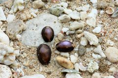 Shellfish on the beach with a rock background Royalty Free Stock Photography