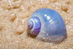 Shellfish on beach with sand background Royalty Free Stock Photos