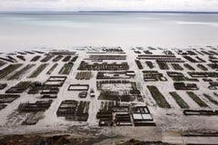 Shellfish beds on the coast Royalty Free Stock Photography