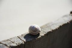 Shellfish on the bench Stock Photo