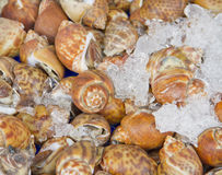 Shellfish Blood Cockles Stock Image
