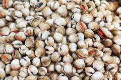 Shellfish Blood Cockles edible background Stock Photography