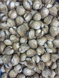 Shellfish Royalty Free Stock Photo