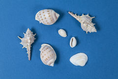 Shellfish Stock Photo