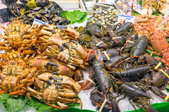Shellfish at the Boqueria market Royalty Free Stock Image