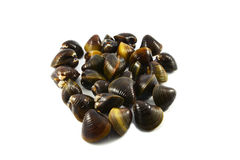 Shellfish Clams Royalty Free Stock Image