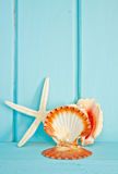 Shellfish decoration of the sea. Ocean decoration Royalty Free Stock Images