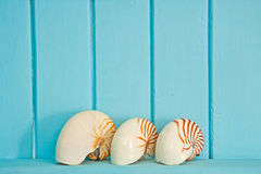 Shellfish decoration of the sea Royalty Free Stock Photo