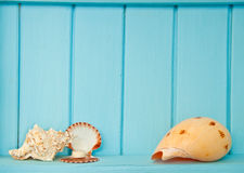 Shellfish decoration of the sea Stock Photography