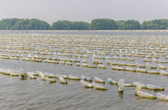 Shellfish farm from old plastic bottles in sea at Chanthaburi, T Stock Photography