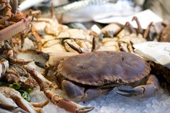 Shellfish Stock Photos