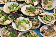 Shellfish for food. Seafood. Shellfish. Raw scallops in shells with green onions Royalty Free Stock Photos