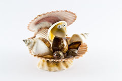 Shellfish in the form of a man. In studio environment Royalty Free Stock Photo