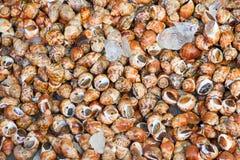 Shellfish in fresh market at ferry of Angsila, Choburi, Thailand Stock Photos