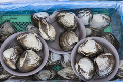 Shellfish in a fresh seafood market Stock Image