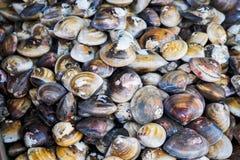 Shellfish in fresh seafood market Stock Photo