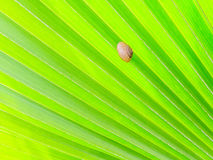 Shellfish on Green palm Leaf Stock Images