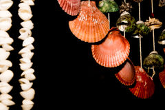 Shellfish. This is hanging shell for decorate my home Royalty Free Stock Image