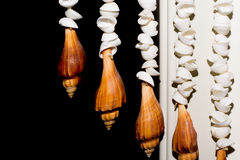 Shellfish. This is hanging shell for decorate my home Royalty Free Stock Photos