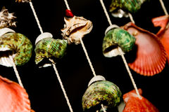 Shellfish. This is hanging shell for decorate my home Royalty Free Stock Photography