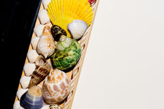 Shellfish. This is hanging shell for decorate my home Stock Photo