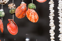 Shellfish. This is hanging shell for decorate my home Royalty Free Stock Photo