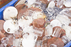 Shellfish and ice Royalty Free Stock Photo