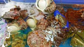 Shellfish, lobster, shell Stock Photos