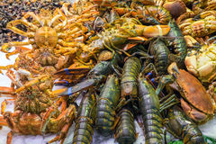Shellfish at a market in Barcelona Royalty Free Stock Images