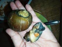shellfish photos stock