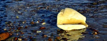 Shellfish on morning marine beach Royalty Free Stock Photo