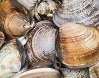 Shellfish Stock Images