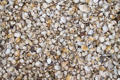 Shellfish Stock Image