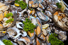 Shellfish platter Stock Photos
