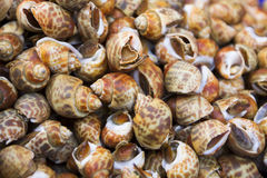 Shellfish. Stock Images