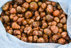 Shellfish. From Rice field for sale in the market Laos Stock Photography