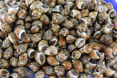 Shellfish for sale Royalty Free Stock Images