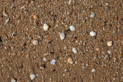 Shellfish on sand Royalty Free Stock Photo