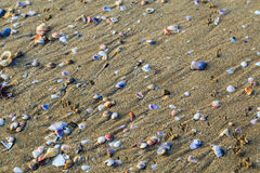 Shellfish at sea beach. Many kind of shellfish at the beach Royalty Free Stock Photography