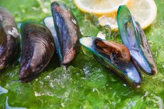 Shellfish Seafood green Mussel fresh ocean gourmet dinner with lemon and ice. On banana leaf background stock image
