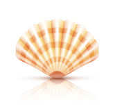 Shellfish seashell Royalty Free Stock Photos