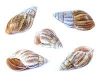 Shellfish. Set isolate on a white background Royalty Free Stock Photos