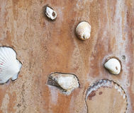 Shellfish and shells to decorate on cement wall. Royalty Free Stock Images