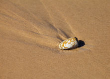 Shellfish are sinking into the sand Stock Image