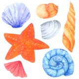 Shellfish and Starfish watercolor collection on white background , Hand drawn for Kids, Greeting Card , Cases design, stock illustration